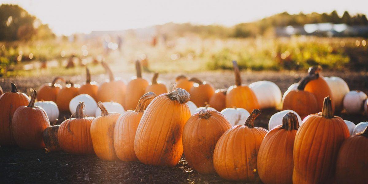 a raw of orange pumpkins on halloween